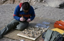 Looking beyond material culture: The study of bioarchaeological and environmental materials has been central to the work strategy at Amarna since the early 80s. Howard Hecker, shown here studying some of the pig bones from the Workmen's Village, established the study of faunal remains at the site. Learn more here: www.amarnaproject.com/pages/publications/environmental.shtml